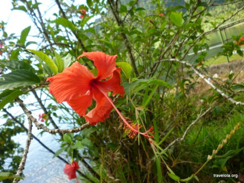 A Polynesian experience would be incomplete without sighting the hibiscus (or the frangipani)