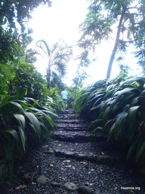 Enter the lushness