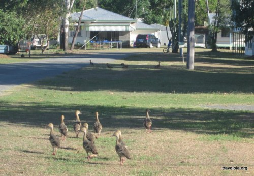 The ducks didn't quite persuade us to stay In Ball Bay