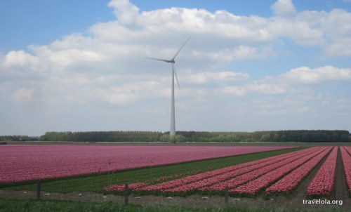 #4 tulips-windmill-holland