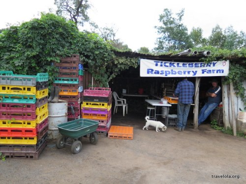 A roadside stall selling raspberries.