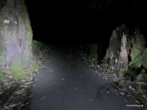 Night time view of entering the woodlands at Mount Field National Park, Tasmania