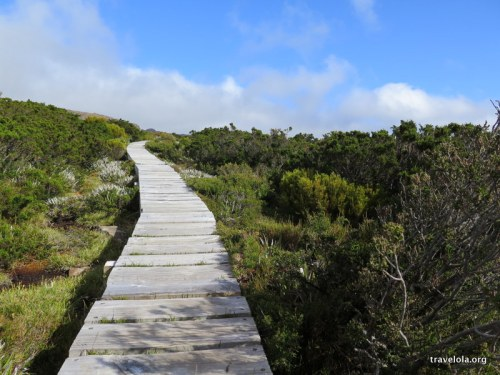 Walking the paths across the scrubland of Mt Field National Park