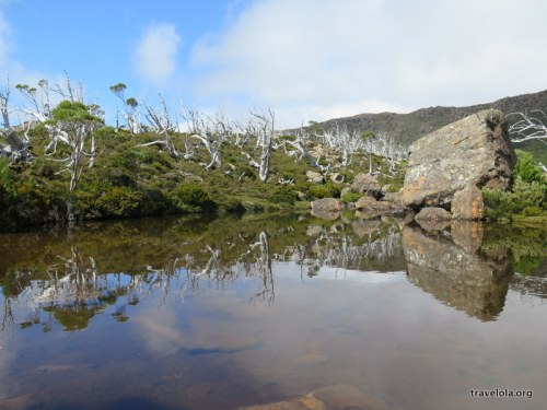 Snow gums with reflection at Lake Newdegate, Mt Field National Park